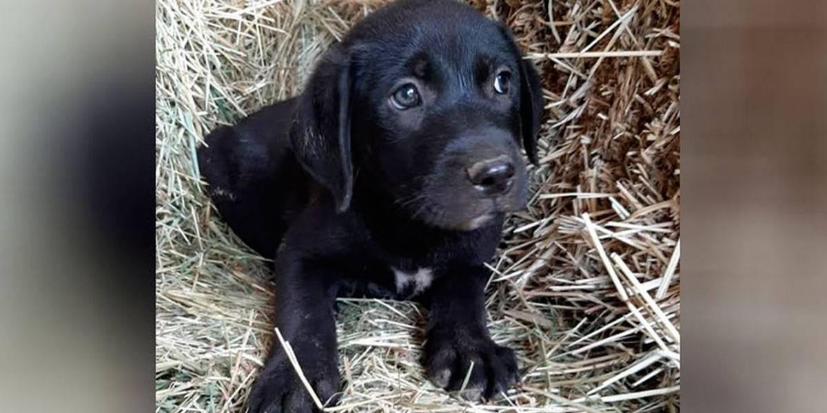 Filhotes de cães são resgatados com a boca colada