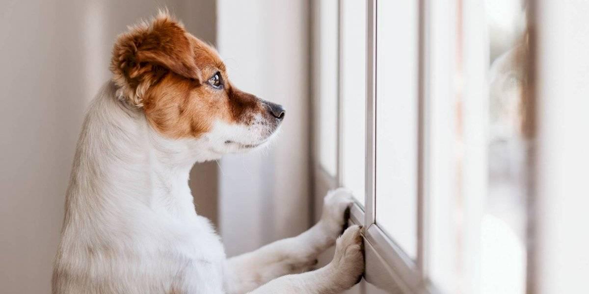 8 recomendaciones para tener un plan de desastres para sus mascotas