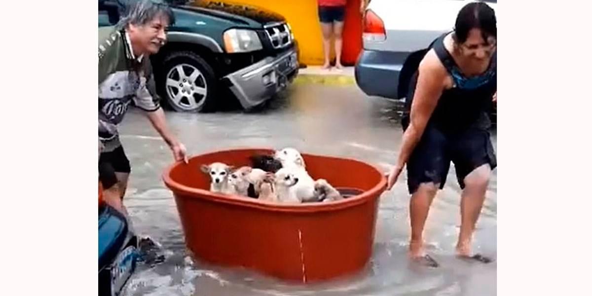 Vídeo mostra filhotes de cães resgatados de furacão em um balde