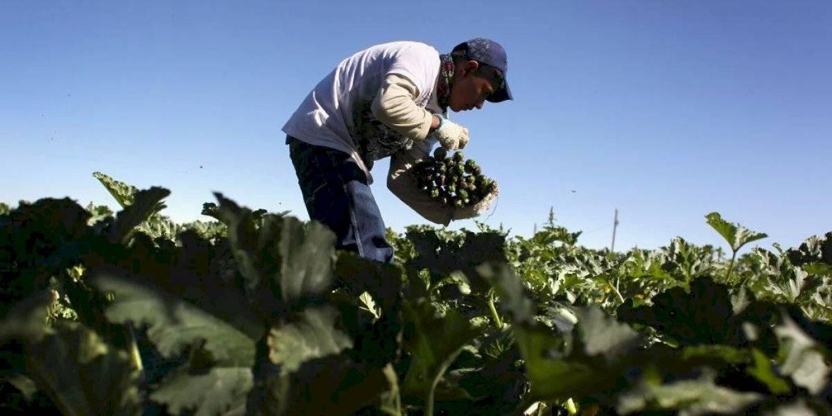 Presume AMLO aumento en remesas, mientras mexicanos pierden empleos en EU