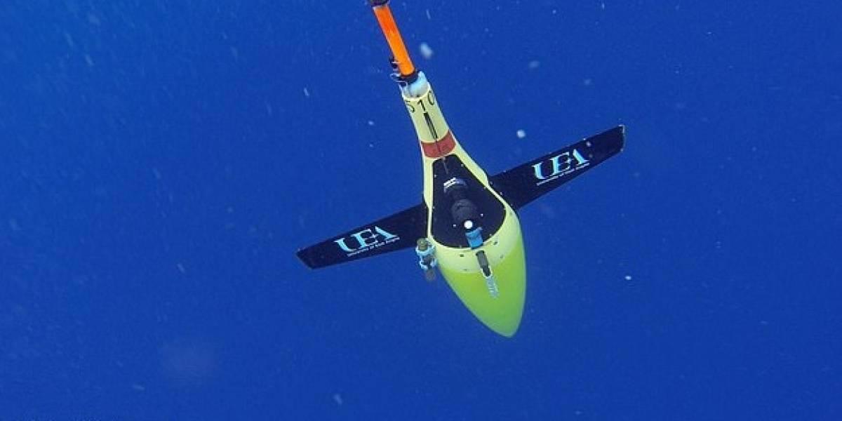 Gracias a un equipo robótico subacuático, científicos pudieron detallar los hábitos alimenticios de las ballenas cachalotes