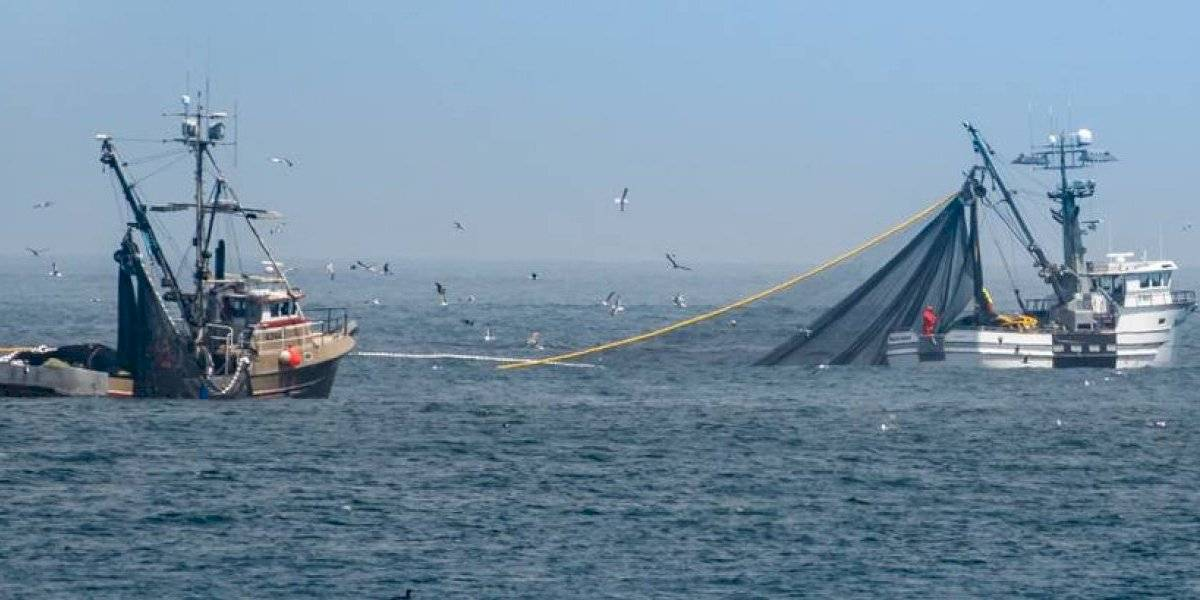 ¿Se acerca la mega flota pesquera china? EEUU denuncia que está frente a Perú