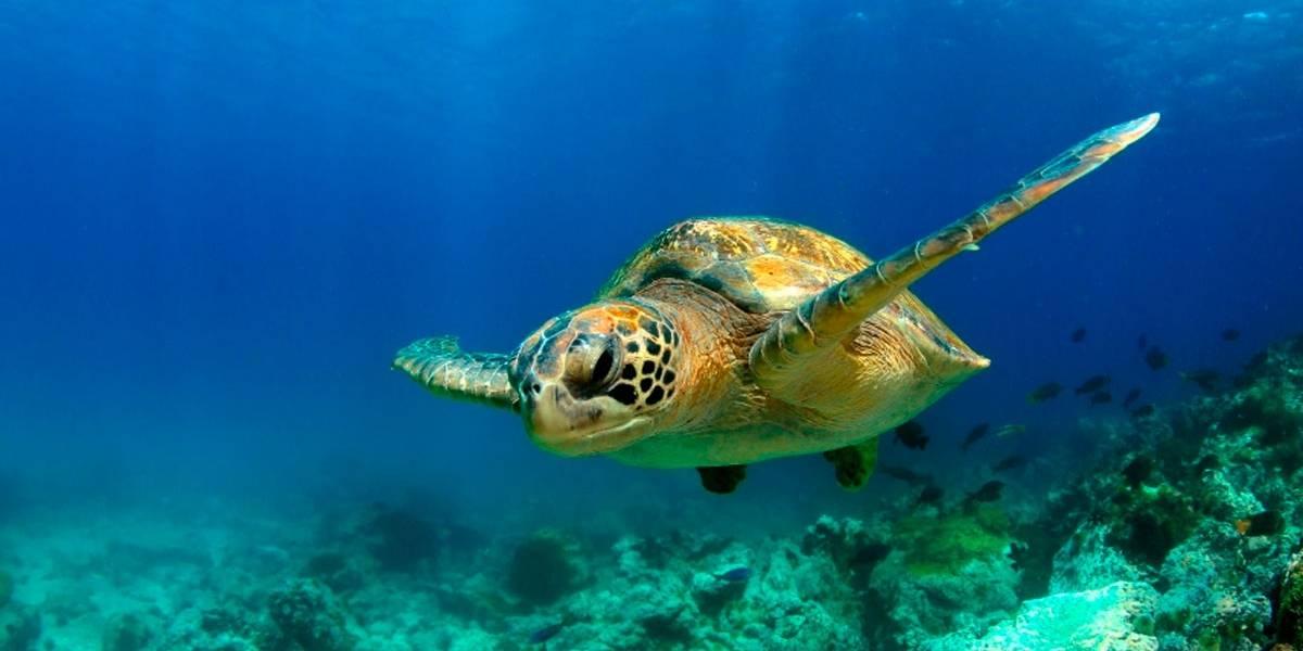 Imensa frota chinesa de pesca nas Ilhas Galápagos coloca ambientalistas em alerta