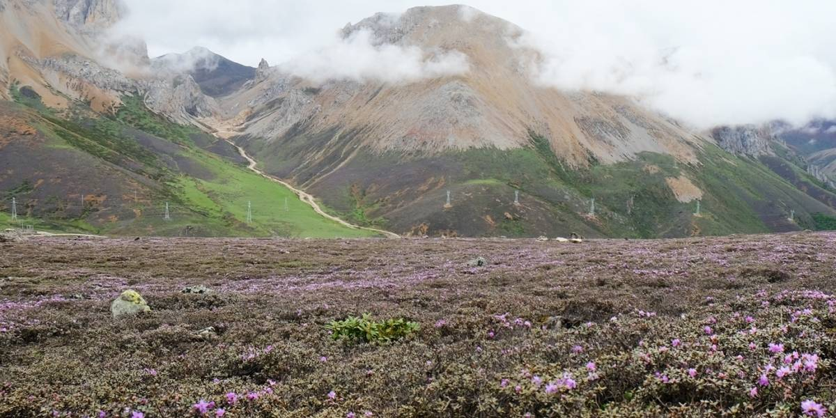 Ciencia.-Descubren en China la flora alpina más antigua de la Tierra