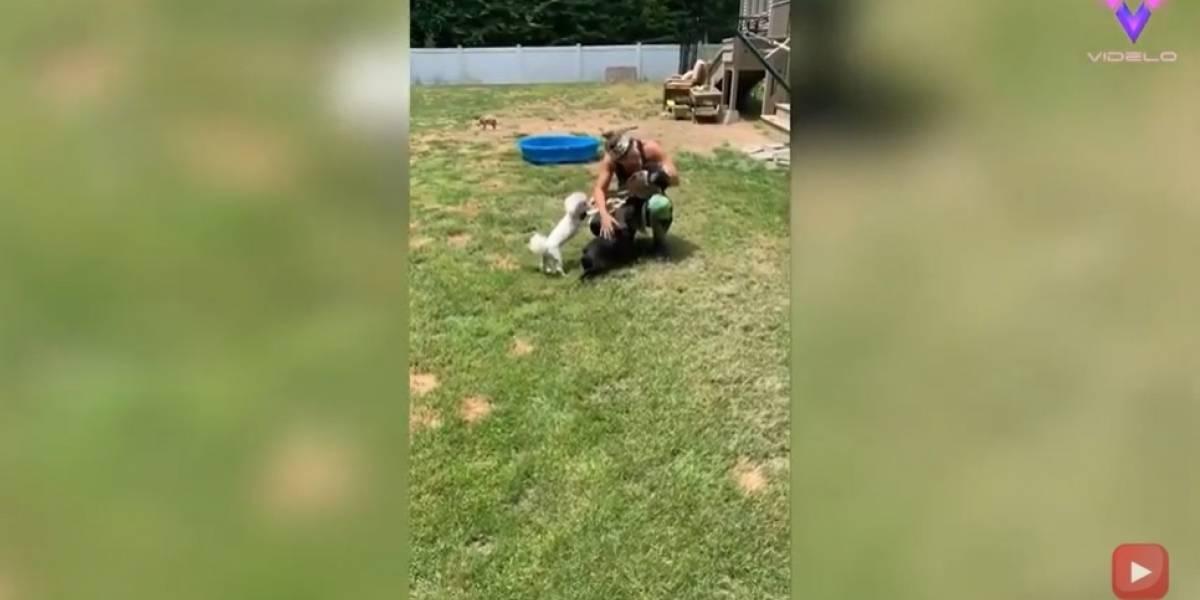 Desconecta.- Esta pareja acondiciona su hogar para que 20 perros discapacitados puedan vivir