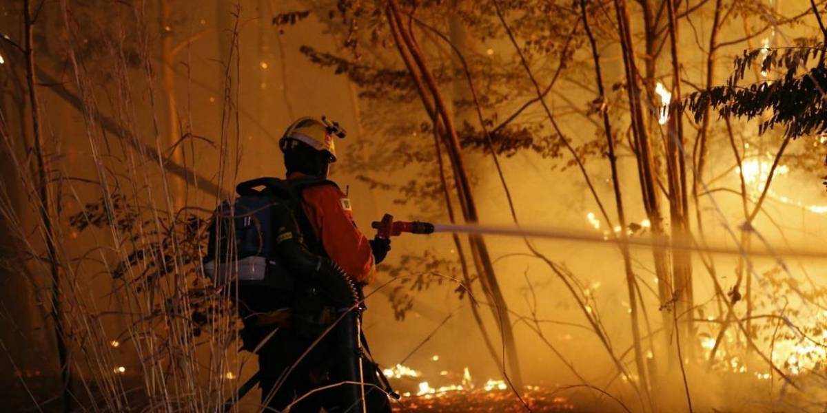 Incêndio destrói 163 hectares na Floresta Nacional de Brasília