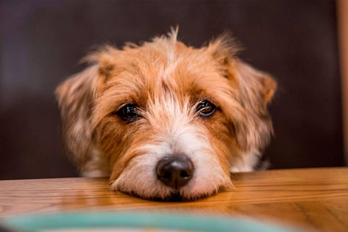 10 alimentos que seu cachorro NÃO pode comer – Metro Jornal