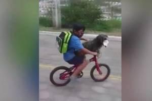 Vídeo de menino preparando cachorro com máscara para dar passeio de bicicleta se torna viral no Twitter