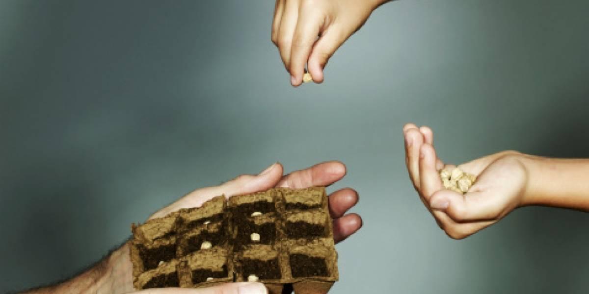 Misteriosos paquetes con semillas chinas llegaron a hogares de distintos países del mundo