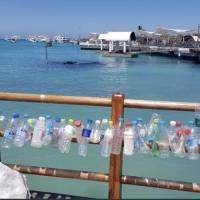 Habitantes de Galápagos denuncian desperdicios chinos y aletas de tiburón en las costas