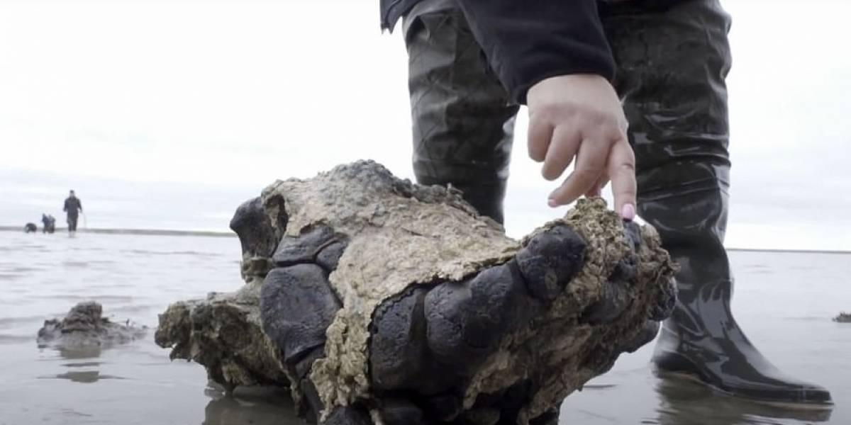 Este mamut murió hace unos 10 mil años y así fue encontrado en el limo de un lago en Siberia