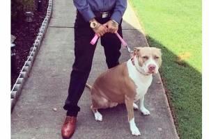 https://www.metrojornal.com.br/social/2020/08/04/pitbulls-assassinos-atacam-jovem-e-arrancam-seu-couro-cabeludo.html