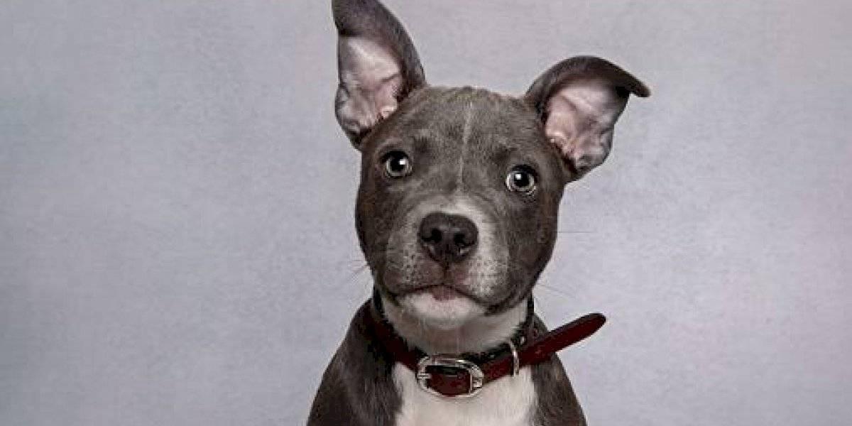 Los productos que son peligrosos para la alimentación de un perro