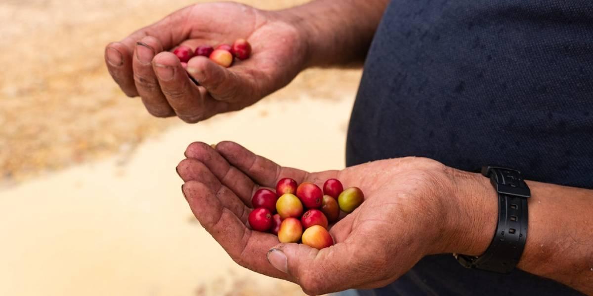 Excombatientes recibirán más de $2000 millones para fortalecer sus proyectos cafeteros