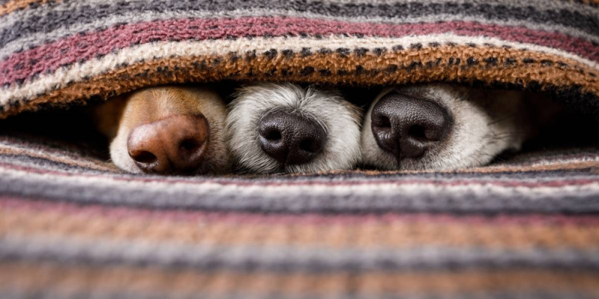 El mejor amigo del humano: los perros podrían detectar el coronavirus con su olfato