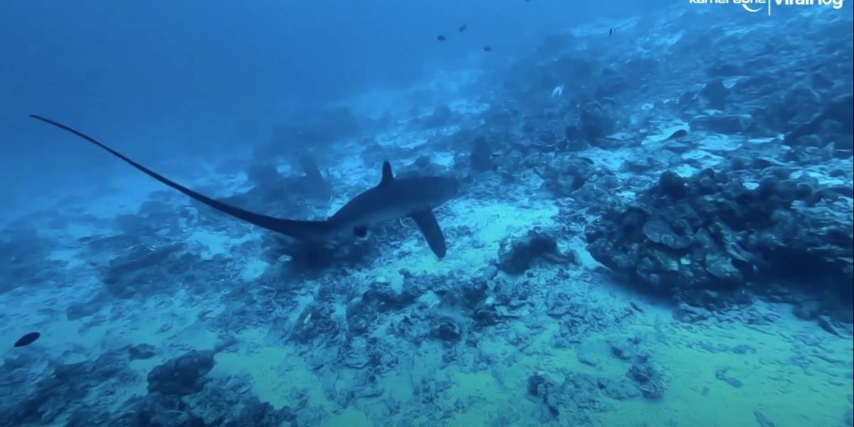 Vídeo impressionante registra 'encontro raro' de mergulhador com tubarão em alto mar