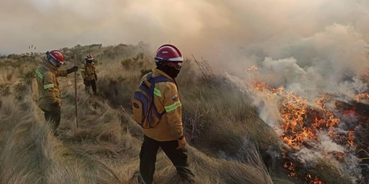Más de 5.000 hectáreas de bosques y vegetación nativa afectadas por el fuego en lo que va de 2020