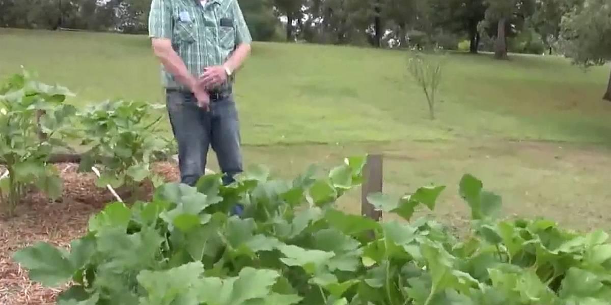 Estados Unidos: un hombre decidió plantar las semillas misteriosas de China