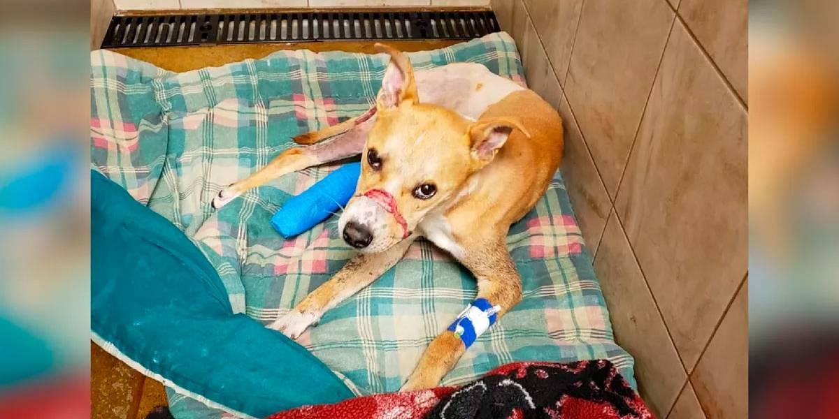 De cortar o coração: cão é abandonado para morrer amarrado em árvore e amordaçado