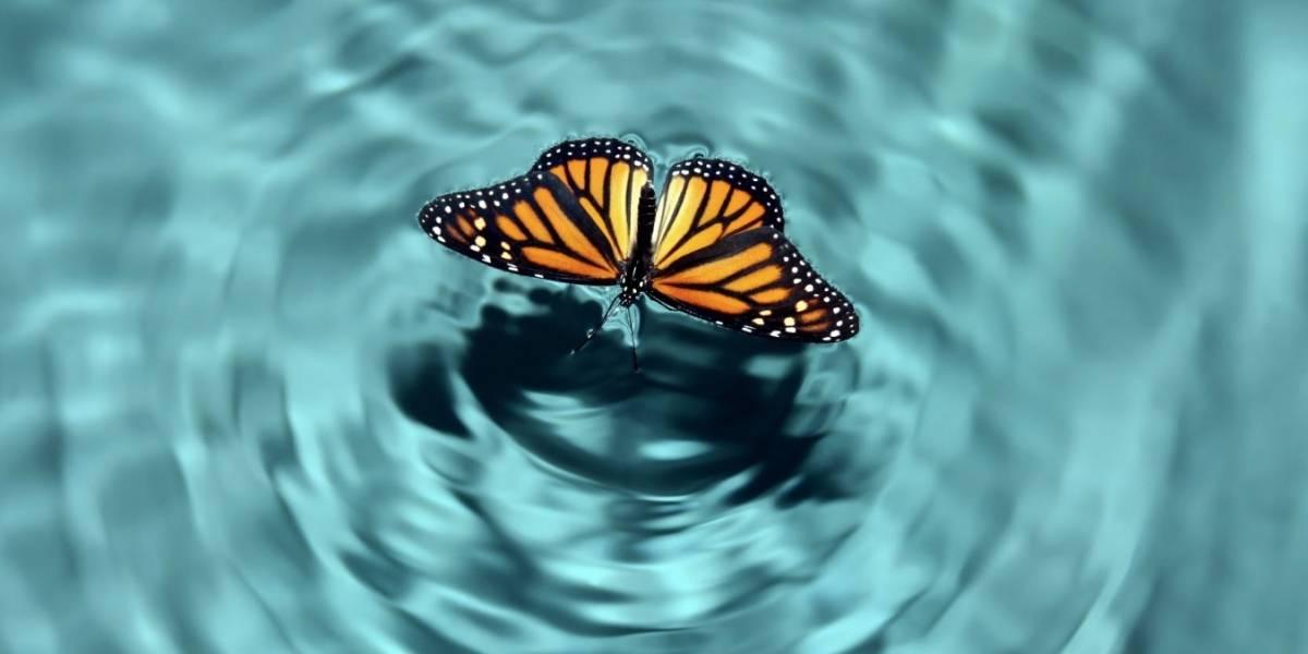 ¿El 'efecto mariposa' realmente funciona?