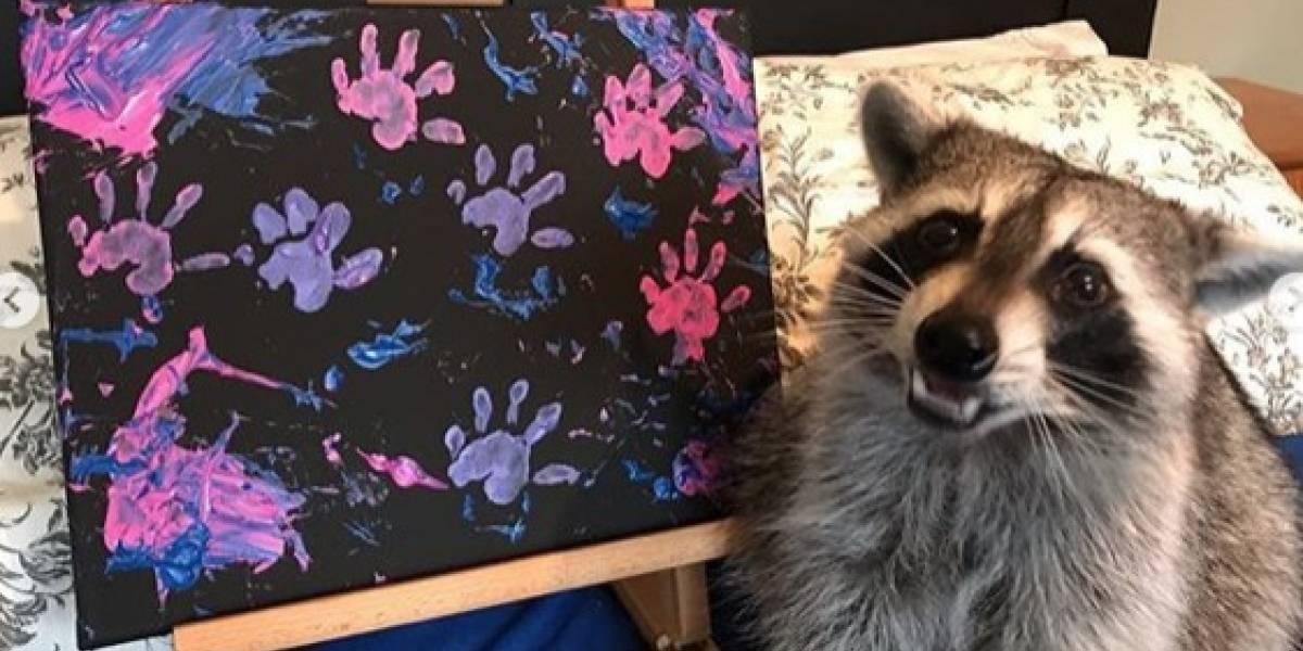 Adorables mapaches se convierten en artistas