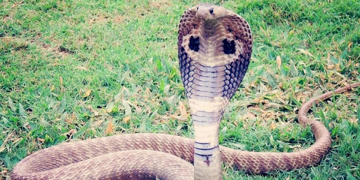 Jovem afirma ser perseguido por cobra que já o picou oito vezes no último mês
