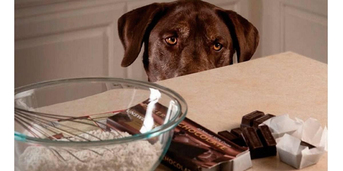 Guloseima que você NUNCA deve dar a seu cachorro