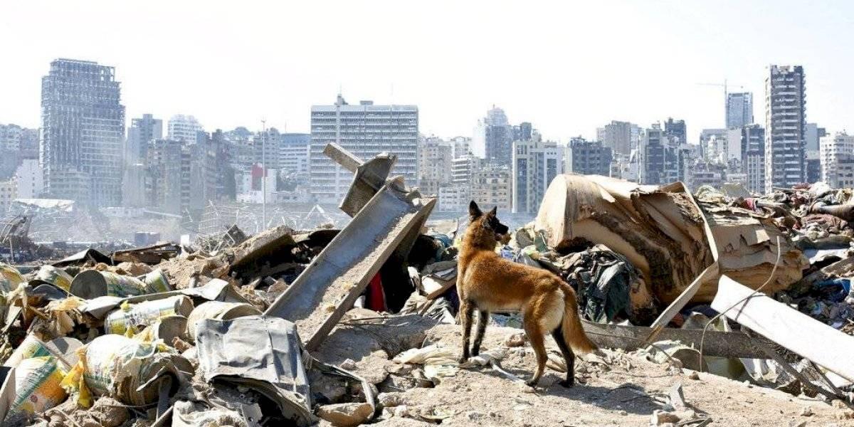 La OMS hace un llamado para recaudar 64 millones de euros y ayudar a Líbano