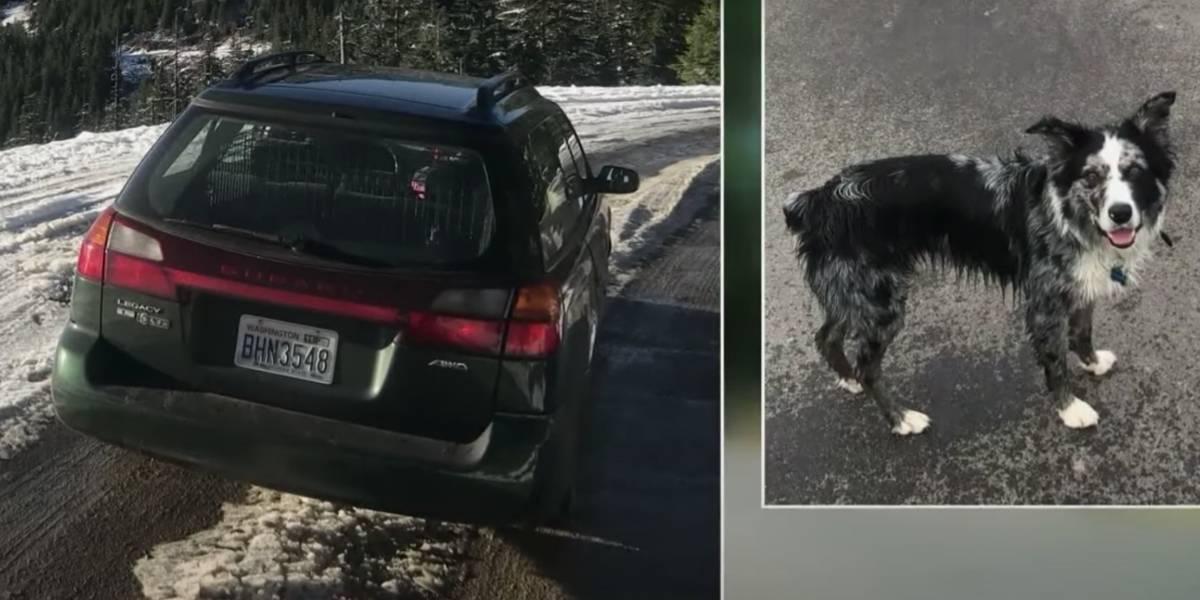 Se roban un auto sin darse cuenta que había un perro en el interior