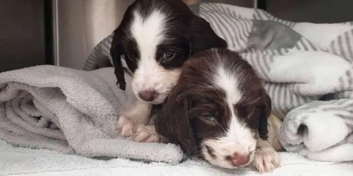 Filhotes de cães morrem após serem abandonados na rua