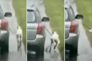 https://www.publimetro.com.mx/mx/autosrpm/2020/08/11/automovilista-pasear-perro-atropella.html