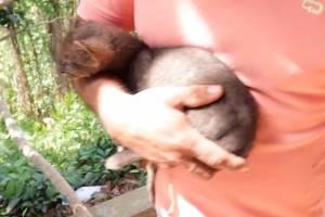 Vídeo: Levou onça-parda para casa pensado ser um gatinho abandonado