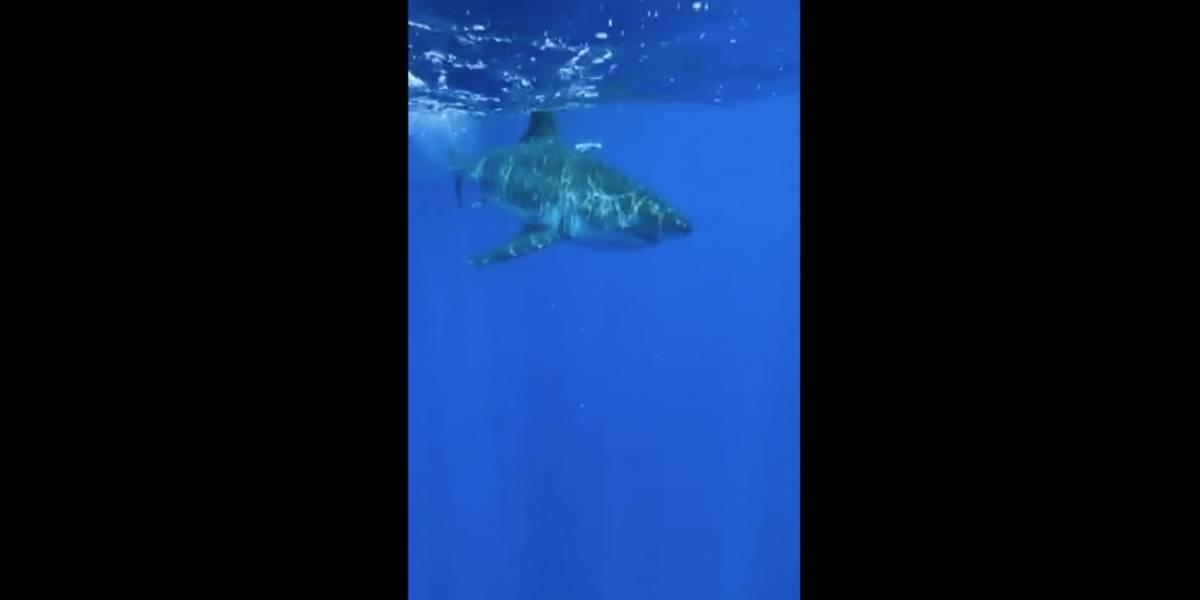 Casal navegando próximo da costa registra vídeo onde mostra grande tubarão-branco se aproximando do barco