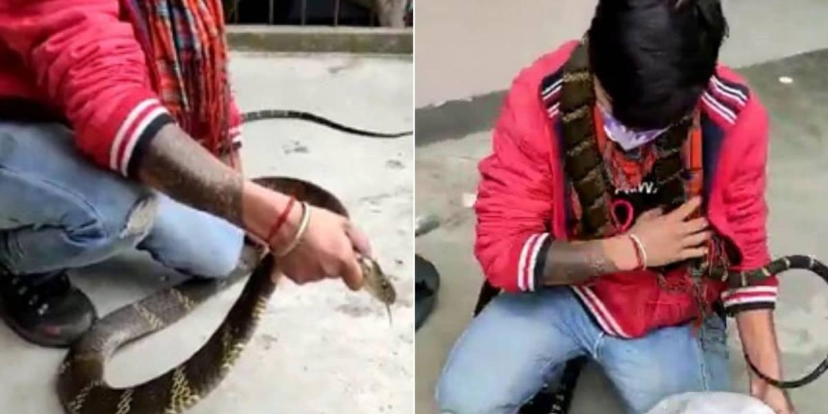Vídeo mostra captura delicada de cobra-rei que tenta se enrolar no pescoço de homem