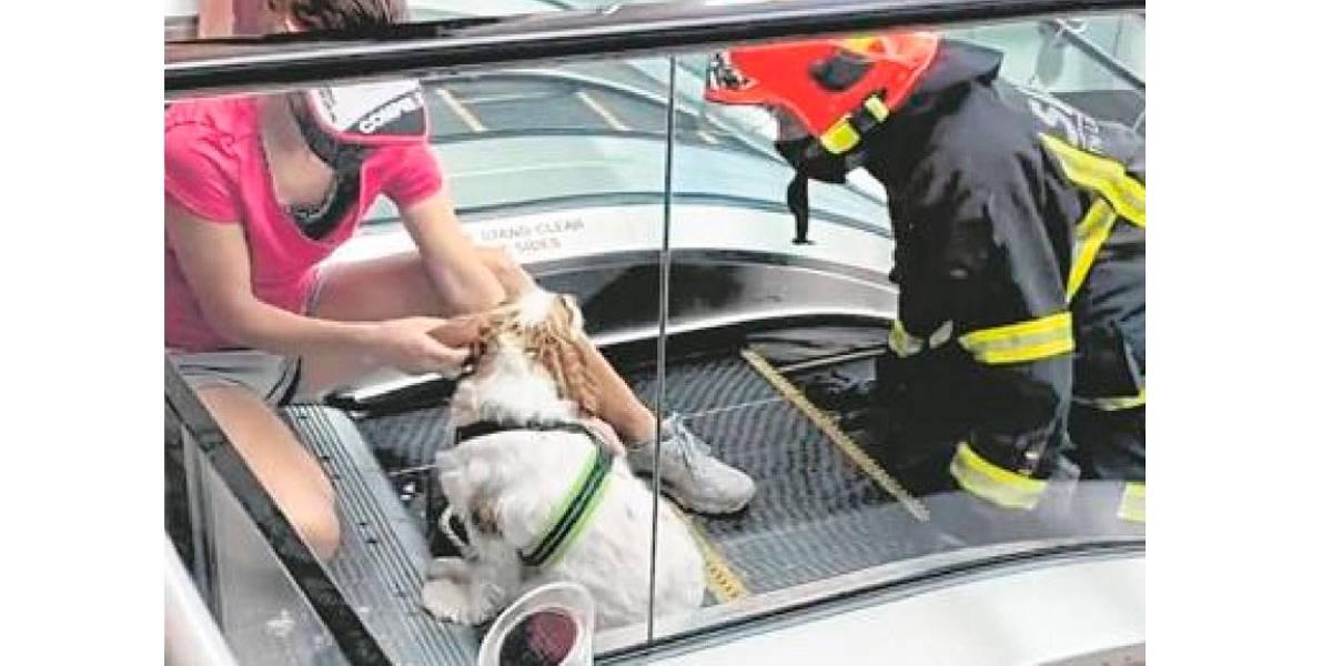 Cachorro prende pata traseira em escada rolante de shopping e fica gravemente ferido