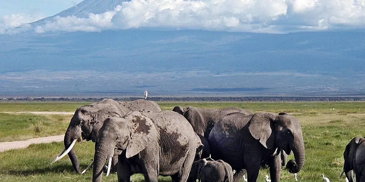 Nacieron 140 elefantes en Kenia durante la cuarentena por el coronavirus