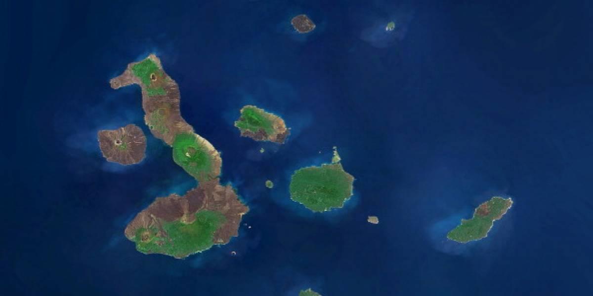 Gran hallazgo: descubren 30 nuevas especies en las aguas profundas de las islas Galápagos