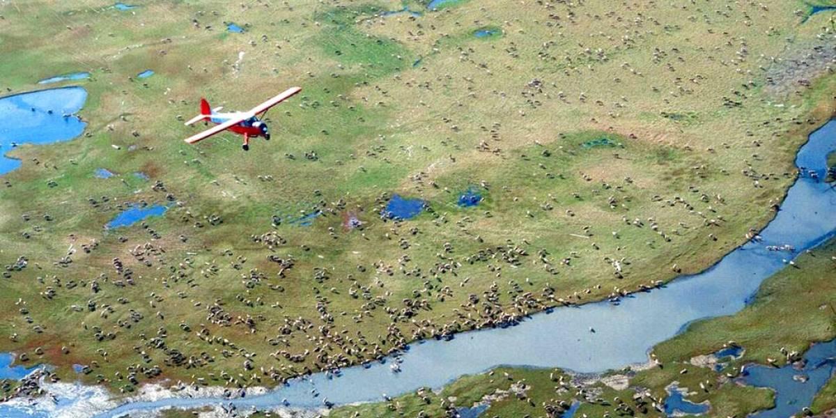 Trump permitirá extraer petróleo en reserva natural en Alaska: es hábitat de osos polares y otros animales
