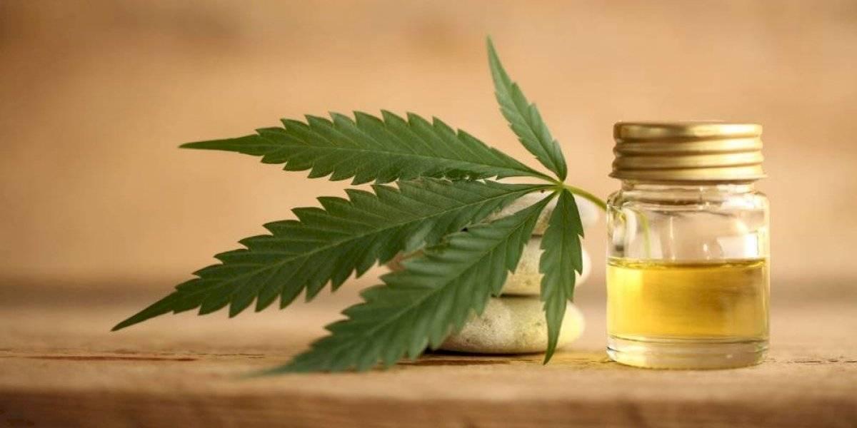 ONU reconoce de forma oficial propiedades medicinales del cannabis