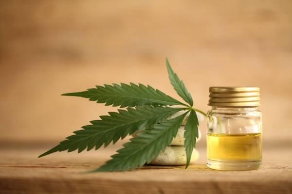 Pandemia y CBD: elemento de la marihuana ayudaría al cuerpo a la luchar contra el covid 19
