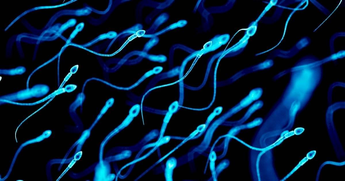 Espermatozoides genética