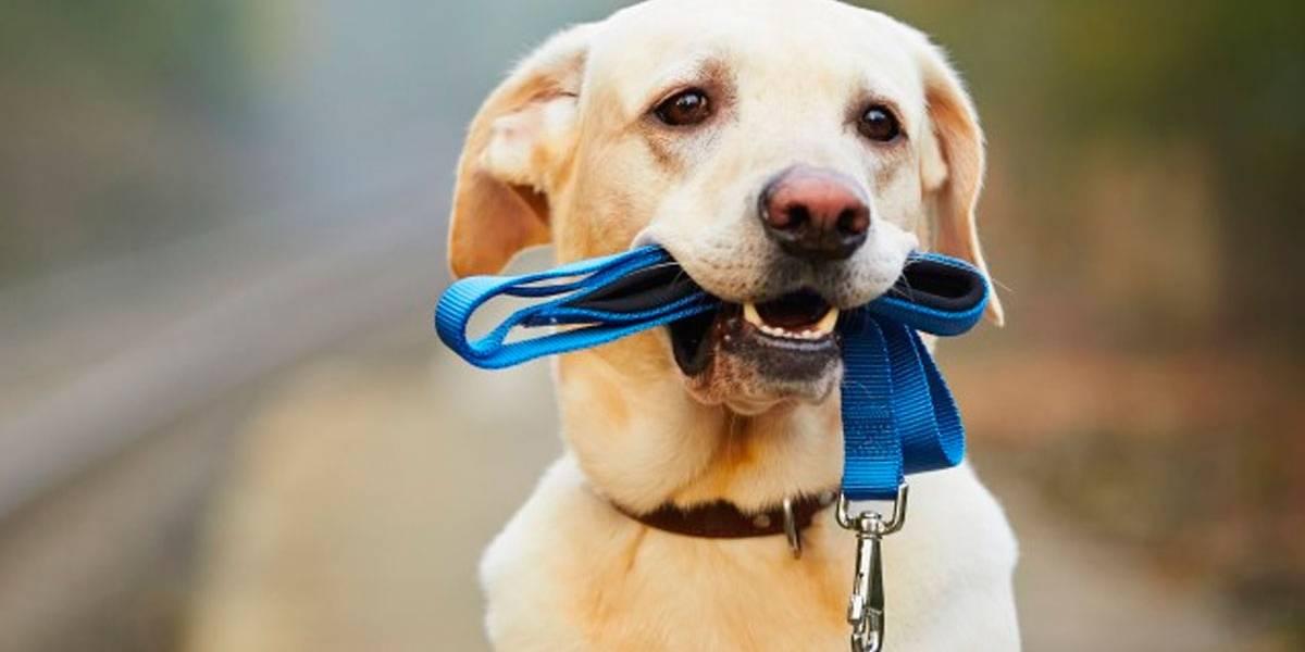 Lei dos Cães obrigará dono a levar pets para caminhar duas vezes por dia na Alemanha