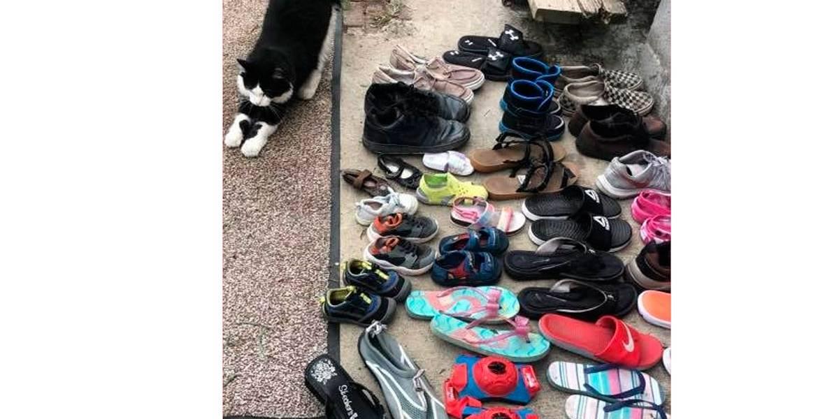 Gato rouba sapatos e deixa vizinhança apavorada