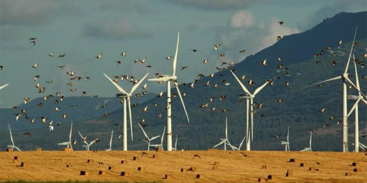La simple acción que redujo más del 50% las muertes de aves en un parque eólico de Noruega