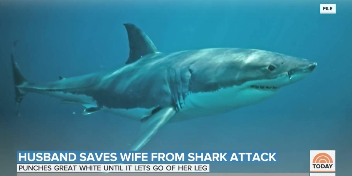 Homem 'dá soco' em tubarão para salvar companheira de ataque