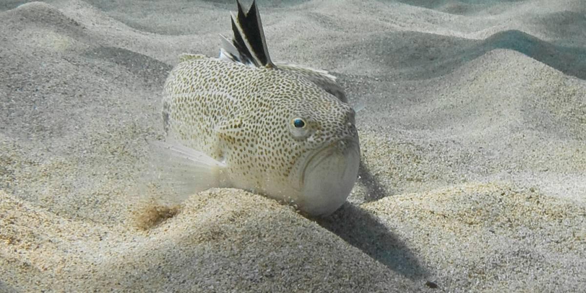 Picadade peixe venenoso mata adolescente que fazia mergulho livre