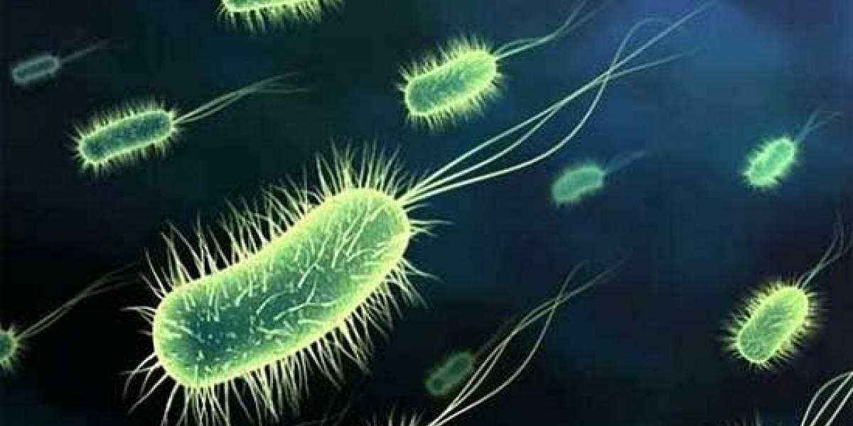 Cuatro pacientes con COVID-19 en Portoviejo tienen la bacteria KPC