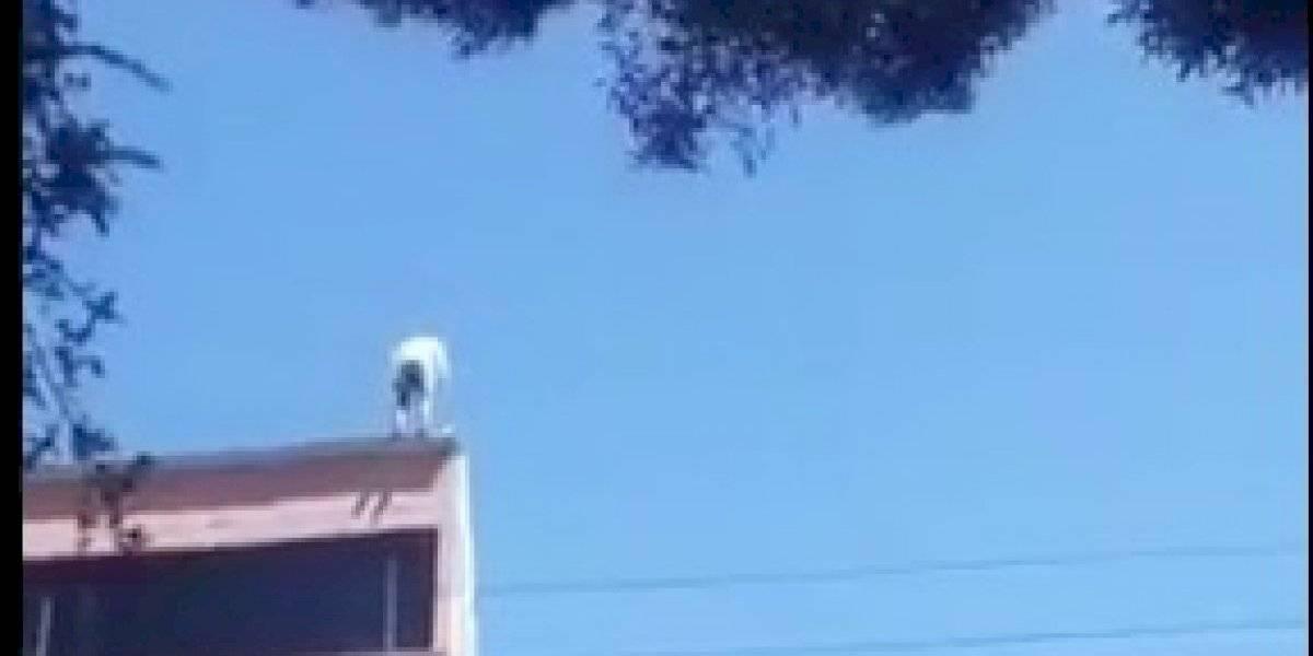 Un joven intentó suicidarse desde un edificio de cinco pisos en el sur de Quito