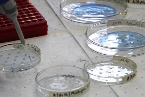Sudáfrica descubre una nueva variante del coronavirus diferente a la del Reino Unido