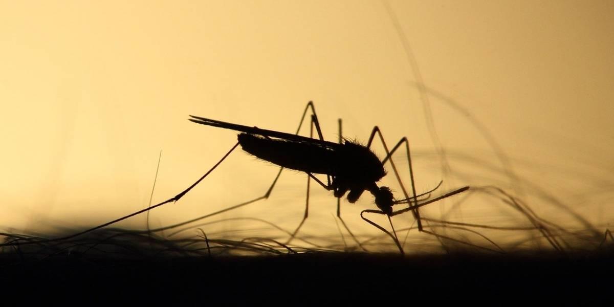 ¿Pueden los mosquitos propagar el coronavirus?